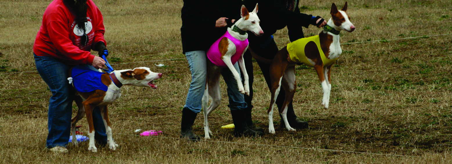 Lake Country Lure Coursers | Lure Coursing in Western New York